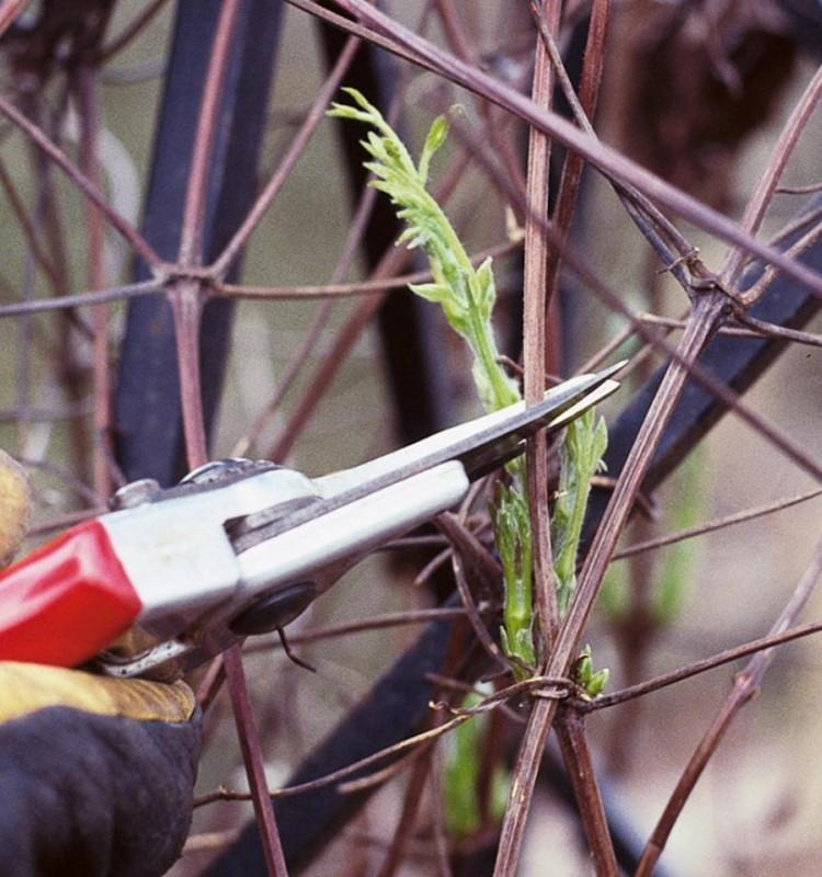 Συμβουλές για την χειμερινή φροντίδα των οπωροφόρων δέντρων